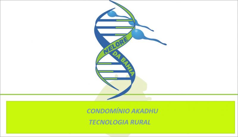 Nelore da Bahia - Condomínio Akadhu (Tecnologia Rural)